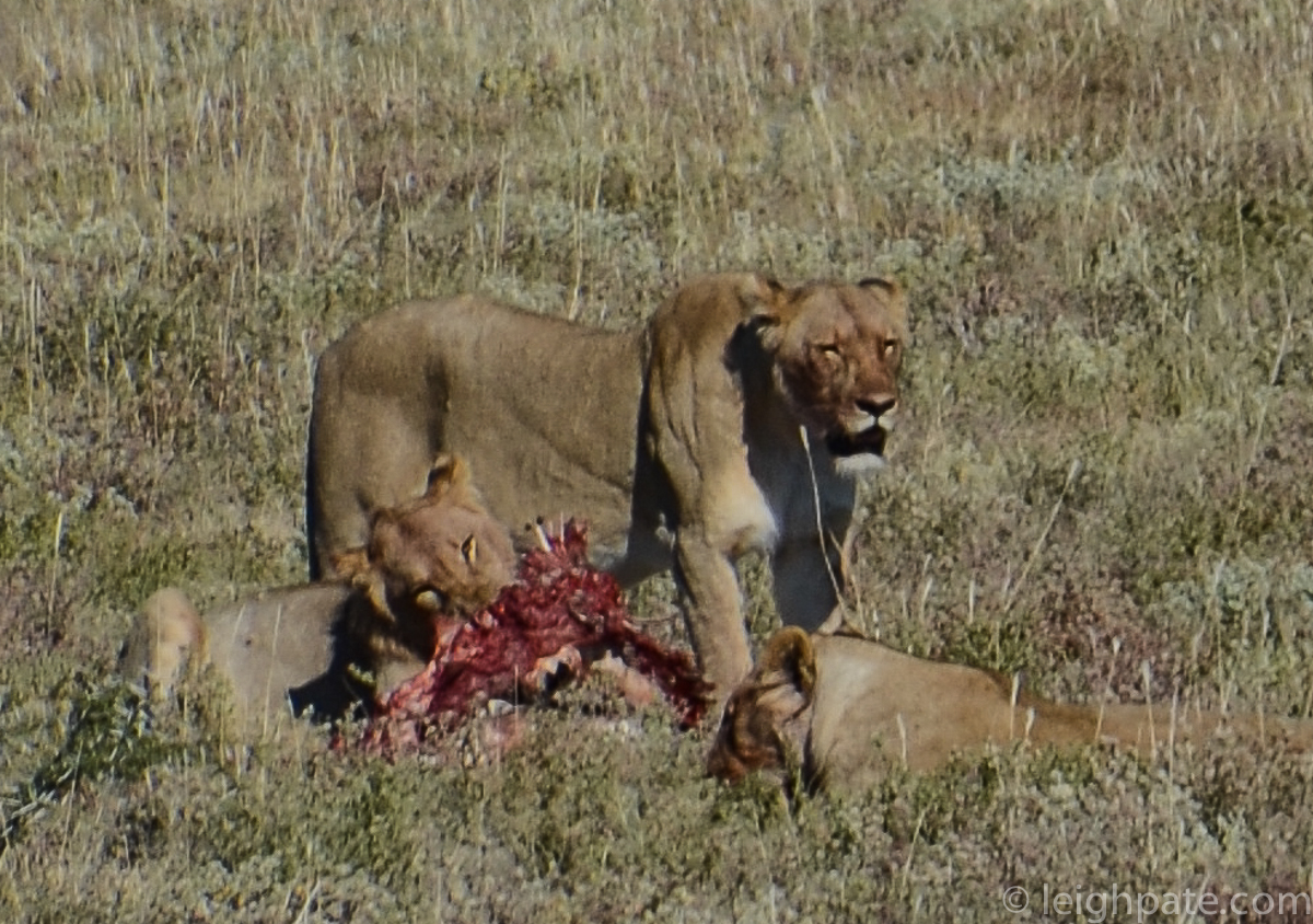 Lion Pride Breakfast