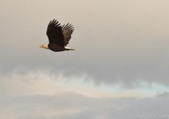 Eagle, Washington State