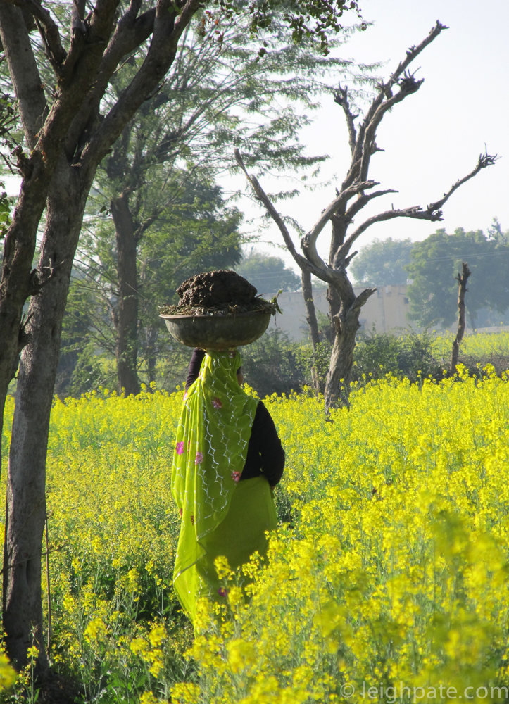 Walking Home through the Mustard Field, India